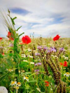 ang-sommar-skane-blommor-anna-bergman